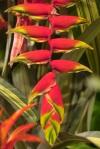 Flower fr186