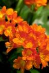 Flower fr433